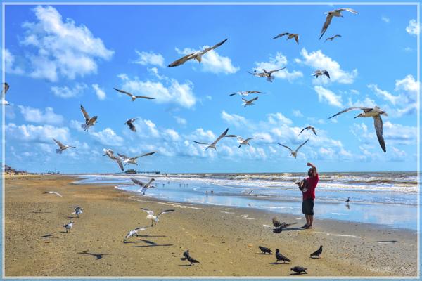 Feeding The Birds 4325-TH-0956